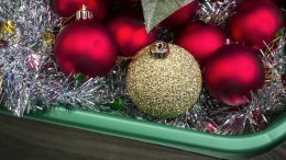 Unpacking Holiday ornaments with one golden ball with several red balls in box;